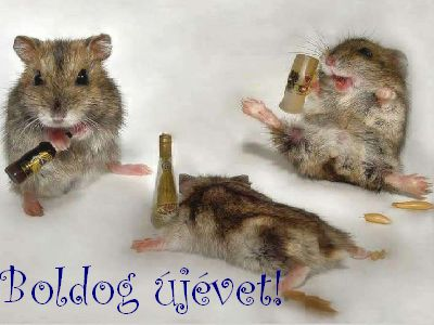 Vicces képek, humoros videók cicákról, kutyákról, egyéb aranyos állatokról  - ez állati jó oldal - BUÉK » garfild.hu