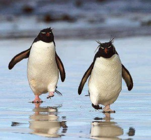 Pingvin pár