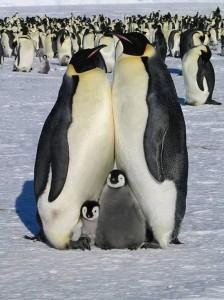 Egy családi fotó