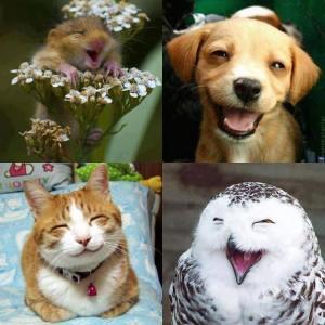 Az állatok is nevetnek
