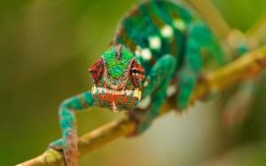 Gyönyörű színekben