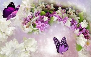 Pillangók varázsa