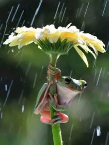 Béka esernyő