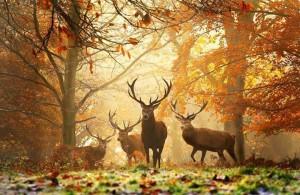 Szarvasok ősszel