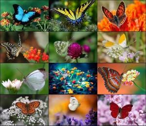 Csodás színekben indulnak