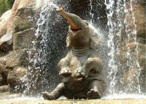 Elefánt zuhany