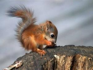 Kicsi mókuci