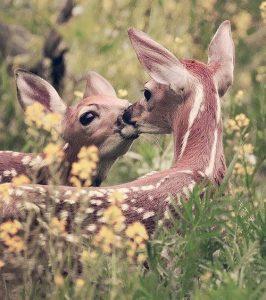 Csókollak