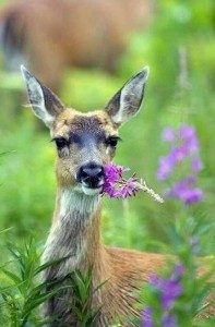 Hoztam neked virágot