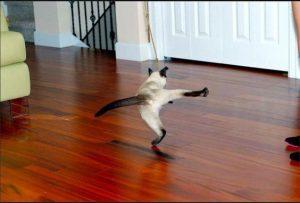 Karate tigris