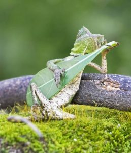 Zenéljünk
