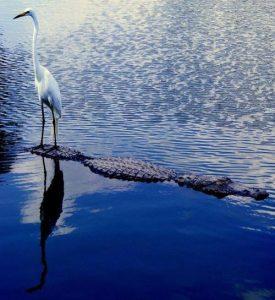 Krokodil és a madár